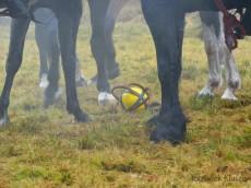 Nie ma lekko, trzeba piłkę podnieśc; foto: JACEK KLUSZEWSKI