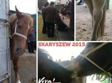skaryszew2