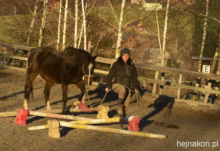 Emir, koń po wyścigach w trakcie rekonwalescencji; foto: FAPA-PRESS