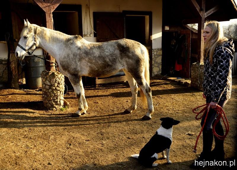 Ile to trzeba się napracować, by siwy koń był znowu siwy; foto: FAPA-PRESS