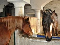 Szisza i Gaja; foto: KLUB GAJA