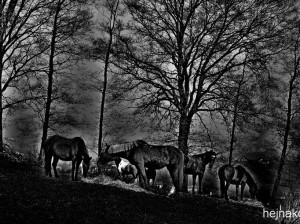 Foto: HEJNAKON