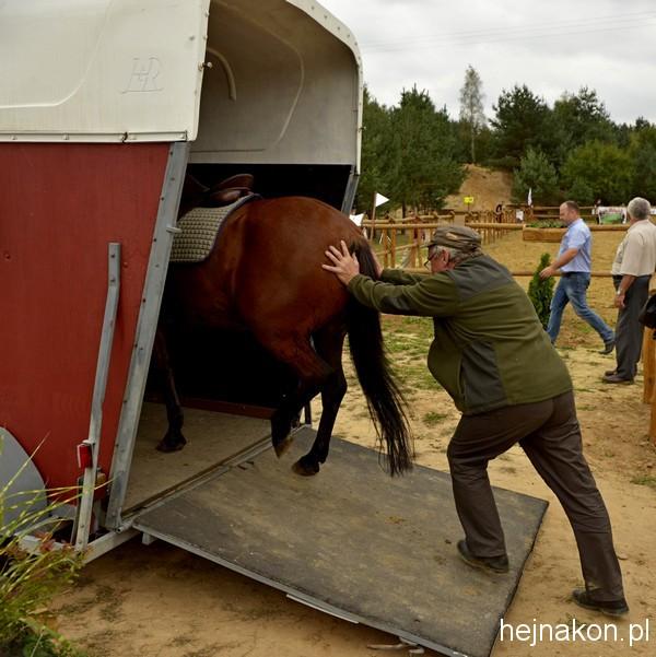 Takiej współpracy z koniem nie polecamy; foto: FAPA-PRESS