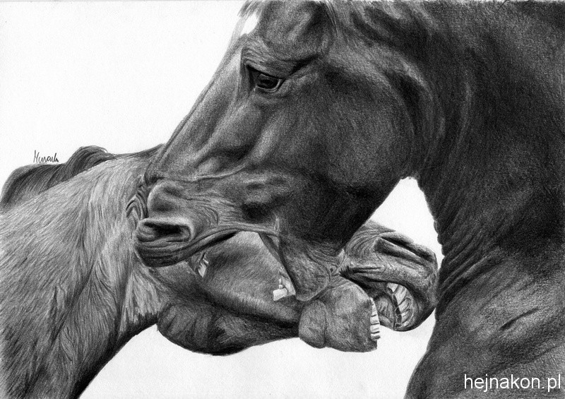 Rysunek-konia-olowek-bitwa