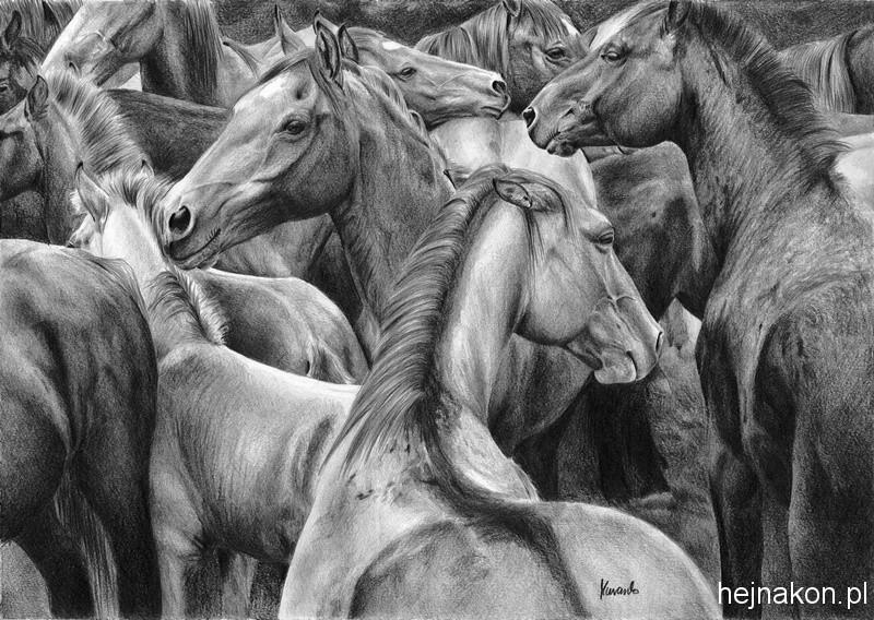 Rysunek-konia-olowek-stado-1