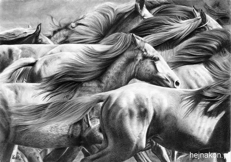 Rysunek-konia-olowek-stado -6