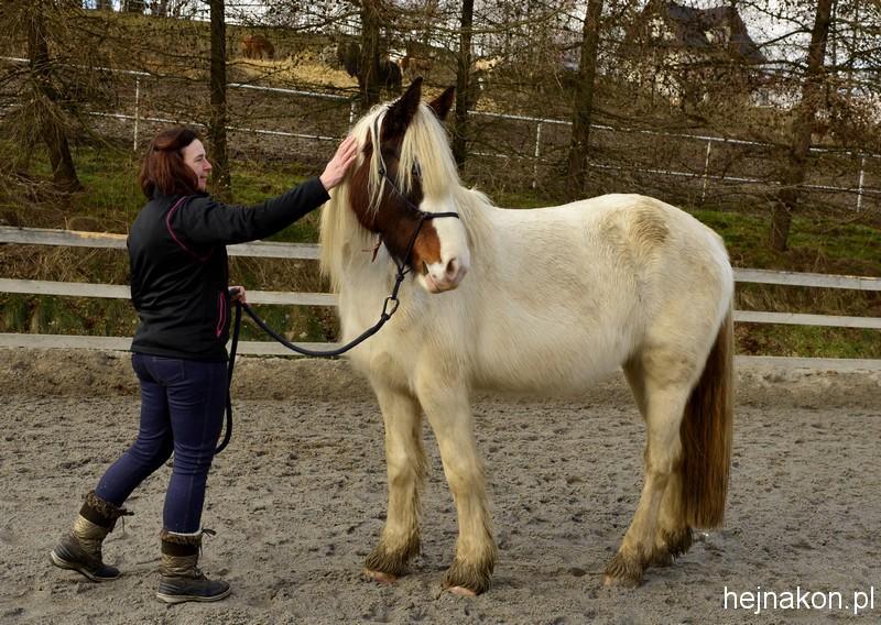 Hej, hej! Skup się. Koń musi być skupiony na prowadzącym zajęcia. Jeśli nie jest, tracimy czas, bo celu zajęć nie osiągniemy; foto: FAPA-PRESS.